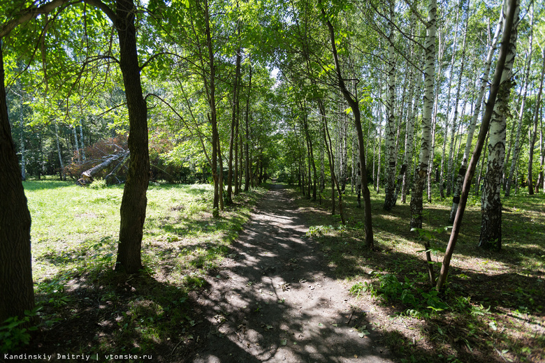 В Михайловской роще Томска весной продолжится вырубка деревьев