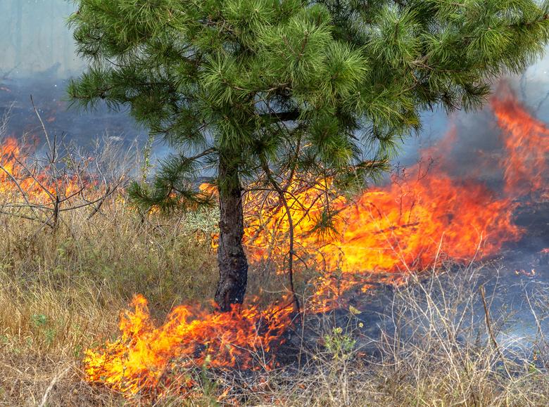 Площадь лесных пожаров вТомской области увеличилась в17 раз