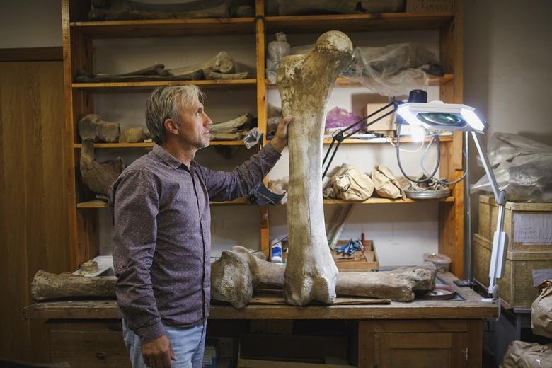 Ученые ТГУ нашли рекордную концентрацию костей мамонтов в России