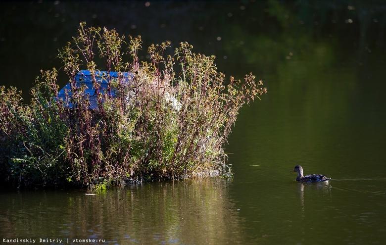 Томские дайверы очистят дно Университетского озера впервые за 10 лет