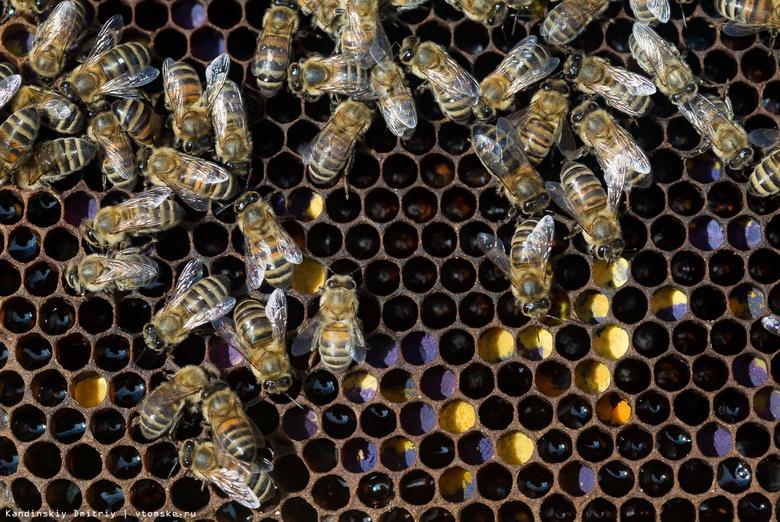Жизнь в меду: будни пчел на томской пасеке
