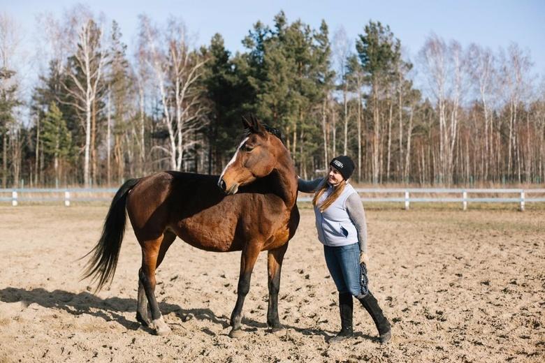 Пострадавшая лошадь до пожара на конном стадионе