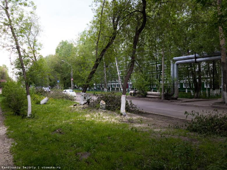 Опасные тополя и клены спиливают около НИИПП и общежитий на Вершинина в Томске