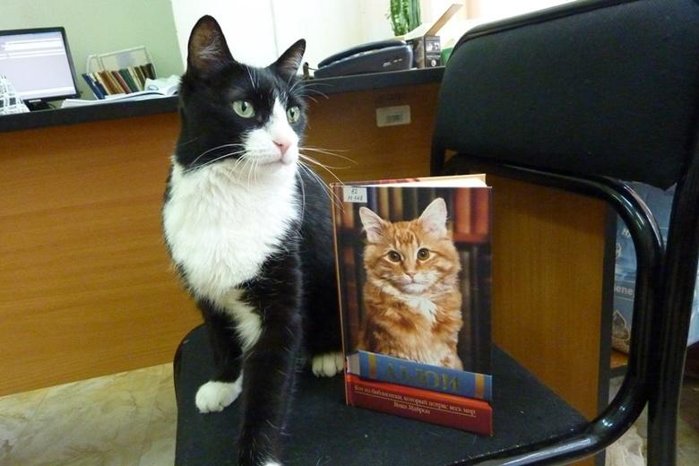 Умер символ библиотеки ТПУ кот Василий, проживший в ней 17 лет
