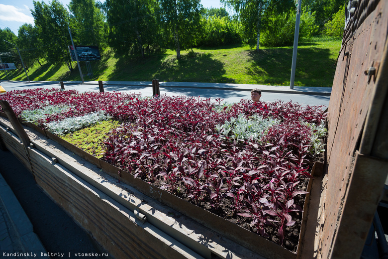 По мнению главы «Зеленстроя», «САХ» не справится с озеленением города