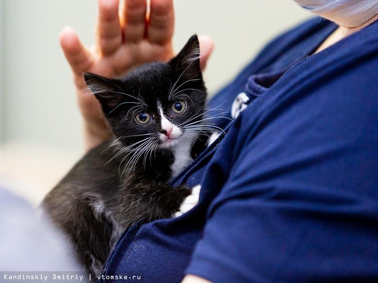 Акция по раздаче бездомных котят и щенков пройдет в Томске в субботу