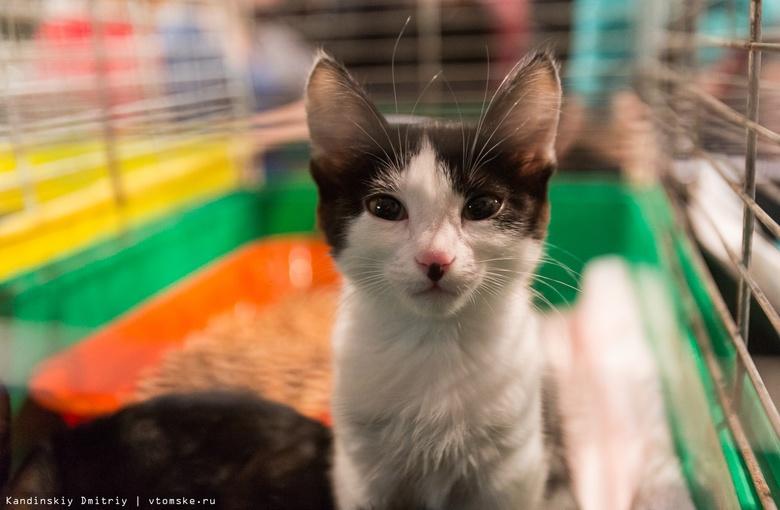 Зоозащитники просят томичей помочь со сбором средств на лечение 3 кошек