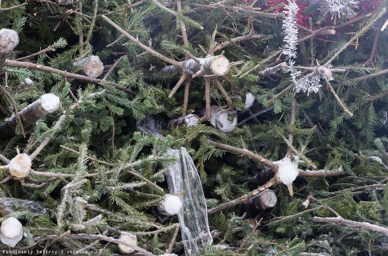 Томичей просят оставить елки у мусорок после Нового года для корма буренкам