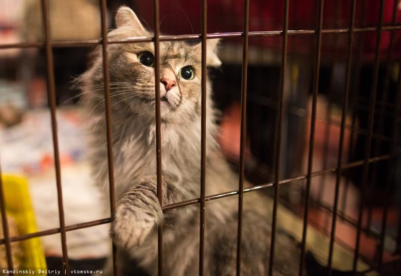Томичей приглашают на ярмарку-раздачу бездомных кошек и гаражную распродажу