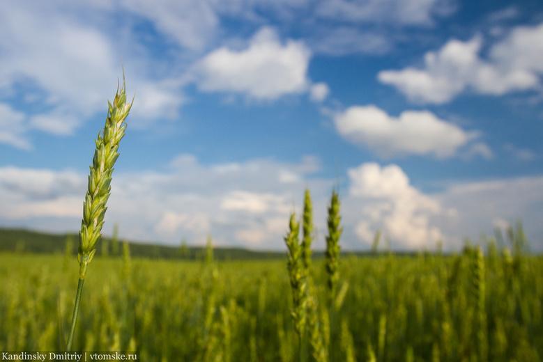 Россия и Венесуэла договорились о ежемесячных поставках пшеницы