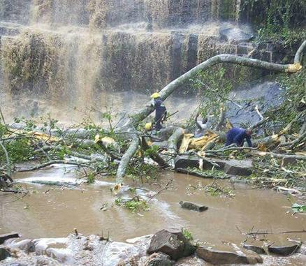 В Гане дерево упало на туристов, приехавших полюбоваться на водопад