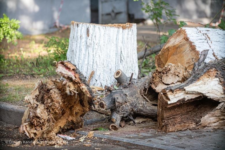 Несколько деревьев упали в Томске из-за сильного ветра