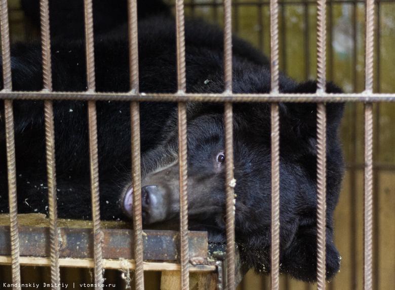 Медведица из закрытого мини-зоопарка в Томске отправилась в новый приют