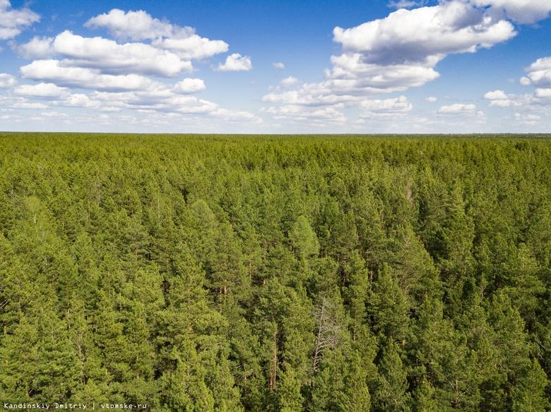 Сотрудник леспромхоза в Томской области незаконно разрешил рубку здоровых деревьев