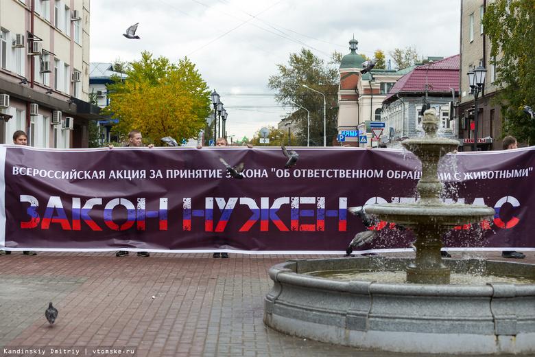 Томские зоозащитники собрали 330 подписей в поддержку закона о защите прав животных