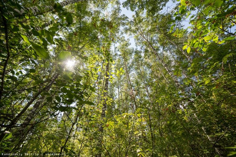 В Томской области завершился первый этап обработки томских лесов от шелкопряда