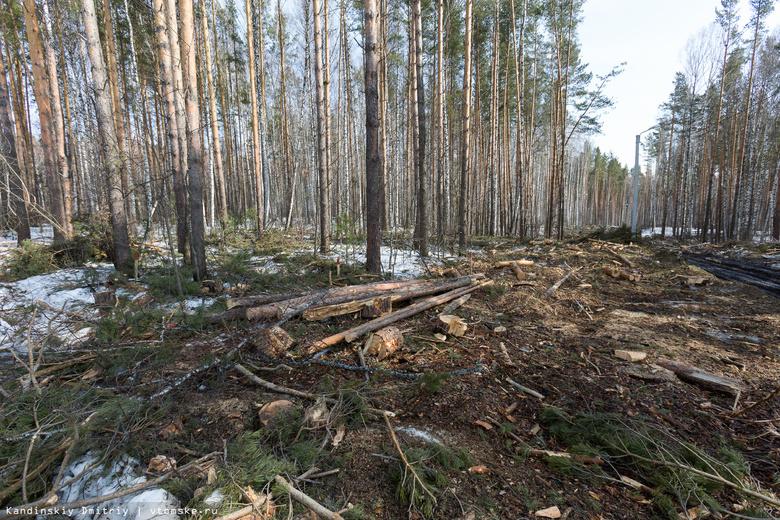 Мэр прокомментировал ситуацию с вырубкой леса в Академпарке