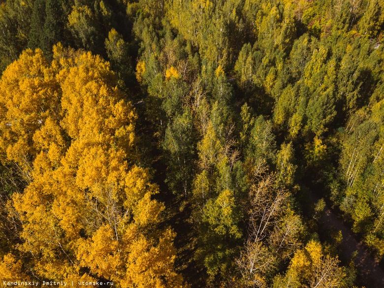 Томичей приглашают посадить деревья в Михайловской роще
