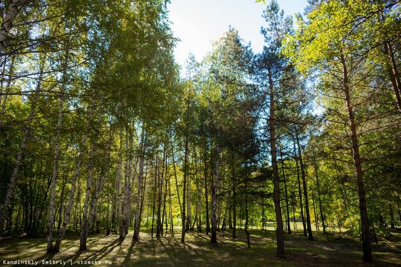 ТДСК прокомментировала опасения жителей о возможной вырубке леса в Томском районе