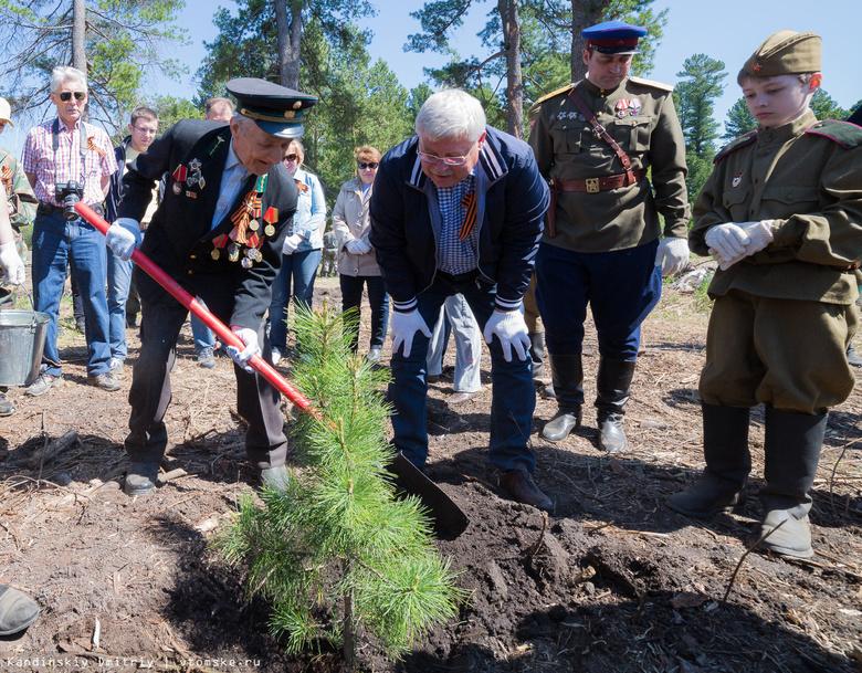 Губернатор поучаствовал в посадке кедров для «Леса Победы» в Губино (фото)