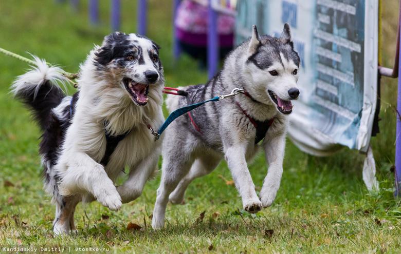 Томичей приглашают на благотворительный забег с собаками