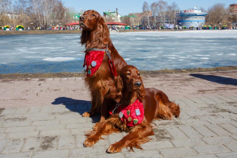 «Зов весенней охоты» в Томске: соревнования подсадных уток и шоу собак