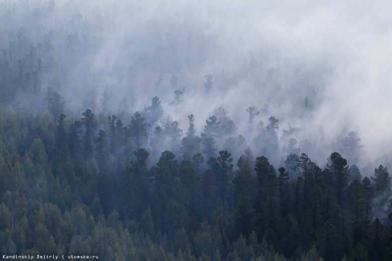 Четыре лесных пожара потушили в томских лесах за выходные
