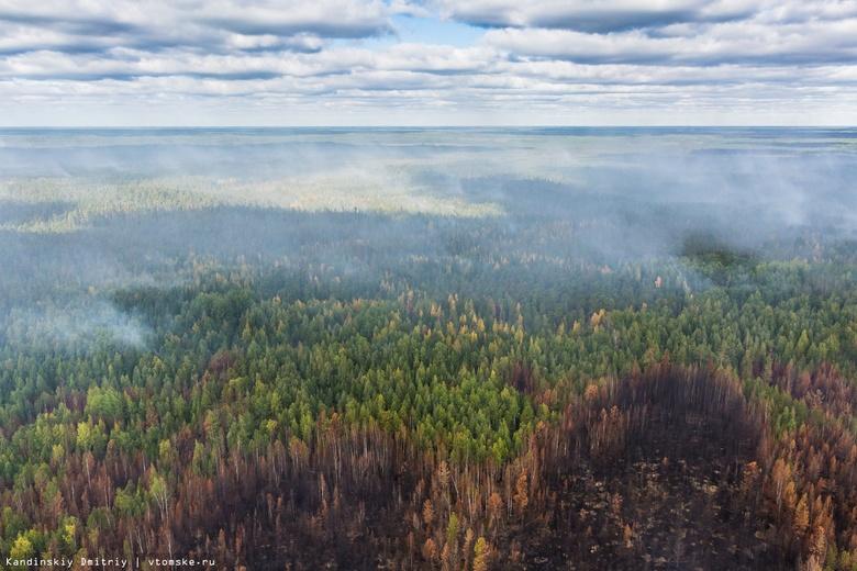 Сжигание сухой травы привело к пожару на 3 гектарах леса в Томской области