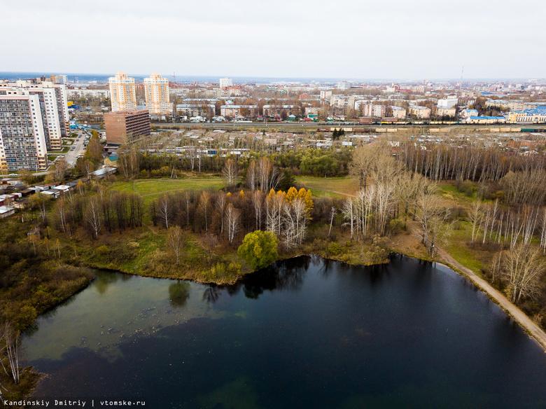 Власти: создание управления лесами Томска не решит проблему «черных» лесорубов
