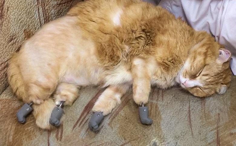 Новые лапки: врач рассказал, как бездомный кот из Томска стал ходить на протезах