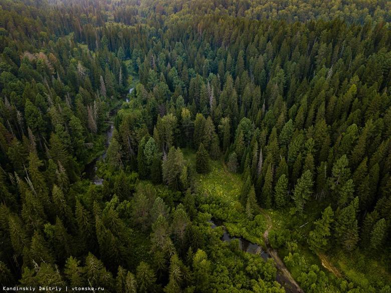 Более 30 тыс елей высадят под Томском в рамках проекта «Дарим лес»