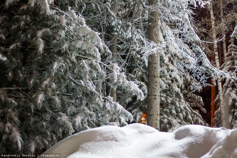 Эксперт: высокие сугробы могут стать проблемой для пернатой дичи в томских лесах
