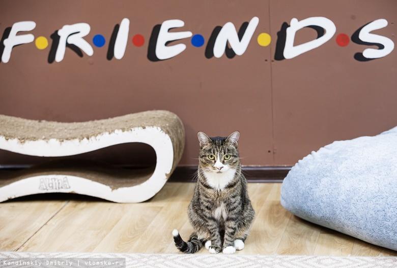 Котики ждут гостей: как пандемия COVID-19 повлияла на работу томского котокафе