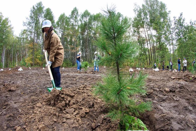 Власти: лесовосстановление полностью компенсирует вырубки и гибель леса в Томской области