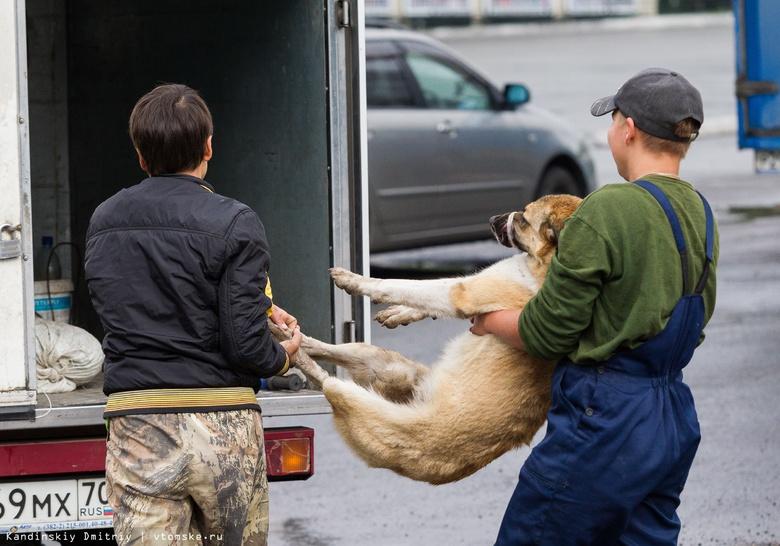 «Верный друг» отловил более 3 тыс бездомных собак с начала 2018г