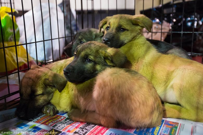 Более 360 бездомных собак отловили в Томске с начала года