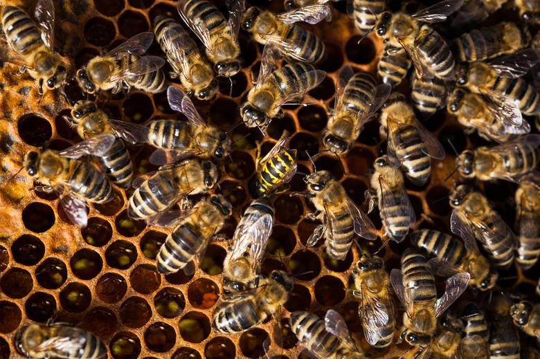Пасечники из Колпашево связывают массовую гибель пчел с обработкой лесов от шелкопряда