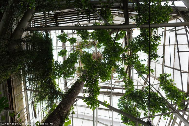 В ТГУ рассказали о планах по масштабной реконструкции Ботанического сада