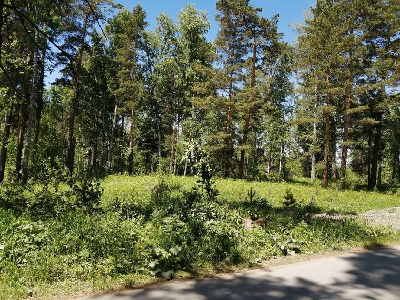Экоактивисты выступили против проекта благоустройства в лесу Академгородка