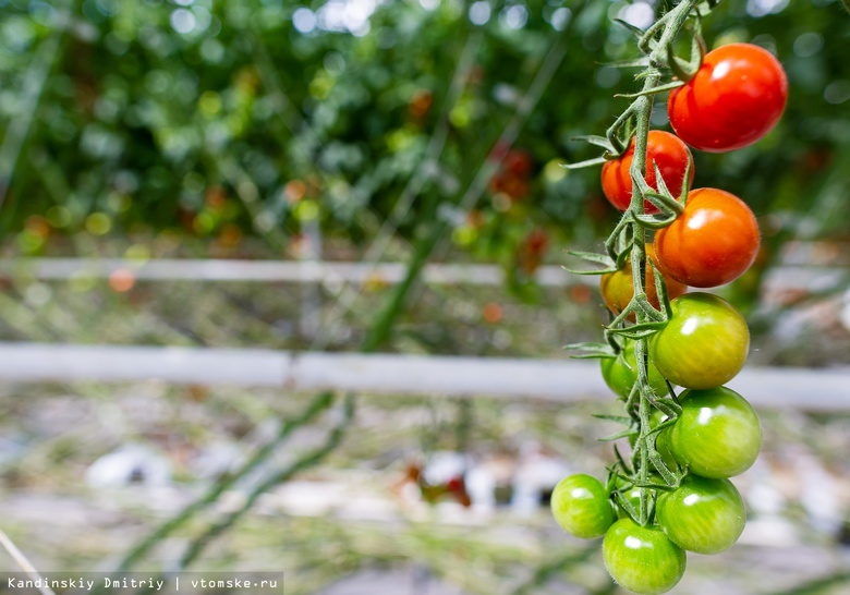 Диетологи дали советы по рациону питания осенью