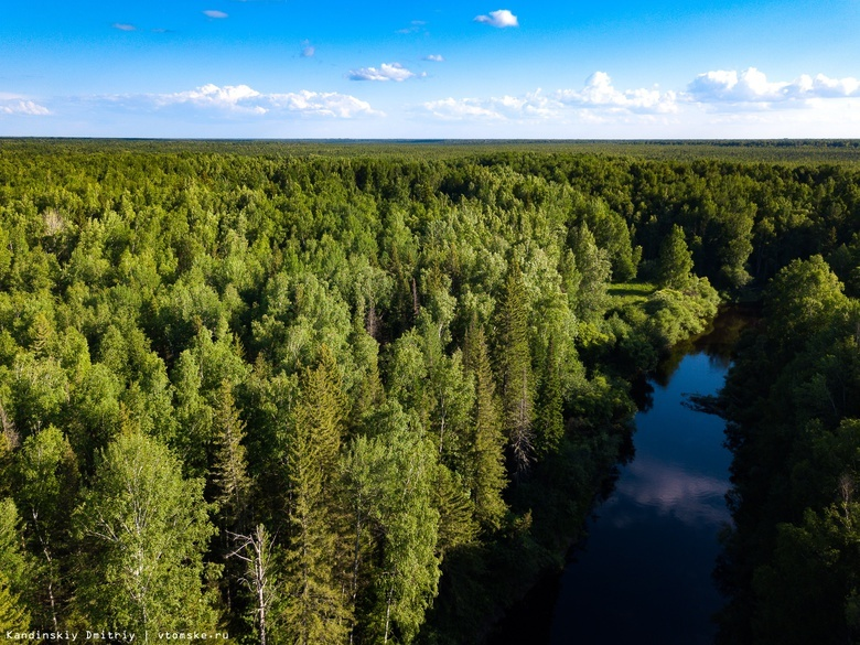 Рыбак из Томского района заблудился в лесу и провел ночь на дереве