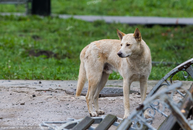В Томске проверят работу «Верного друга» после жалоб зоозащитников