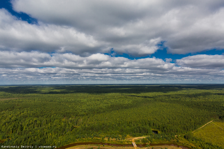 Томская область находится на 7 месте в РФ по запасам древесины