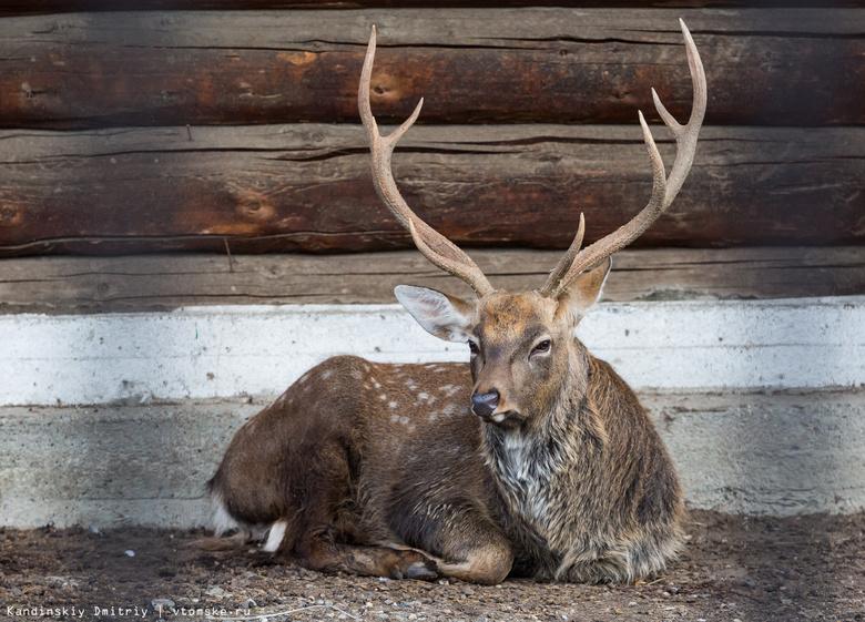 В Томской области в 2017г выявлено 182 случая нарушения правил охоты