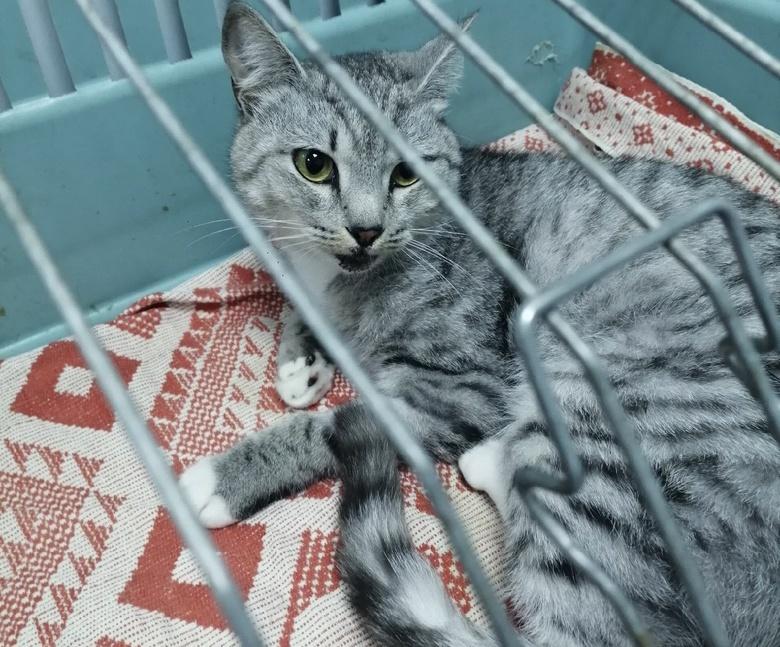 Выброшенный с 8 этажа в Томске кот отправился к новой хозяйке