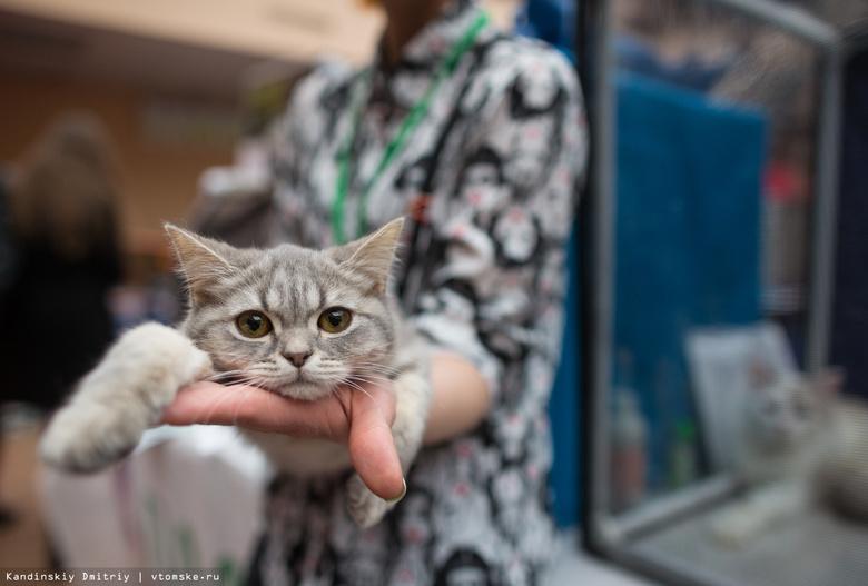 Депутаты внесли поправки в закон о содержании собак и кошек в Томской области