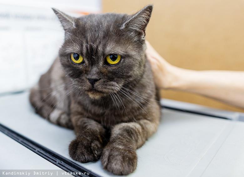 Новый друг: томичи могут забрать домой бездомного котенка или взрослого кота