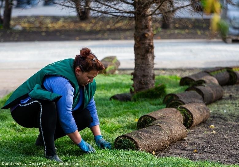 Томичи просят не закрывать газоны плиткой и высаживать больше деревьев