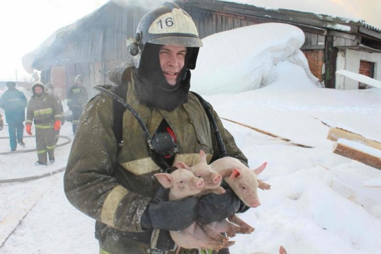 Пожарные больше 4 часов тушили горящее здание свинарника под Томском