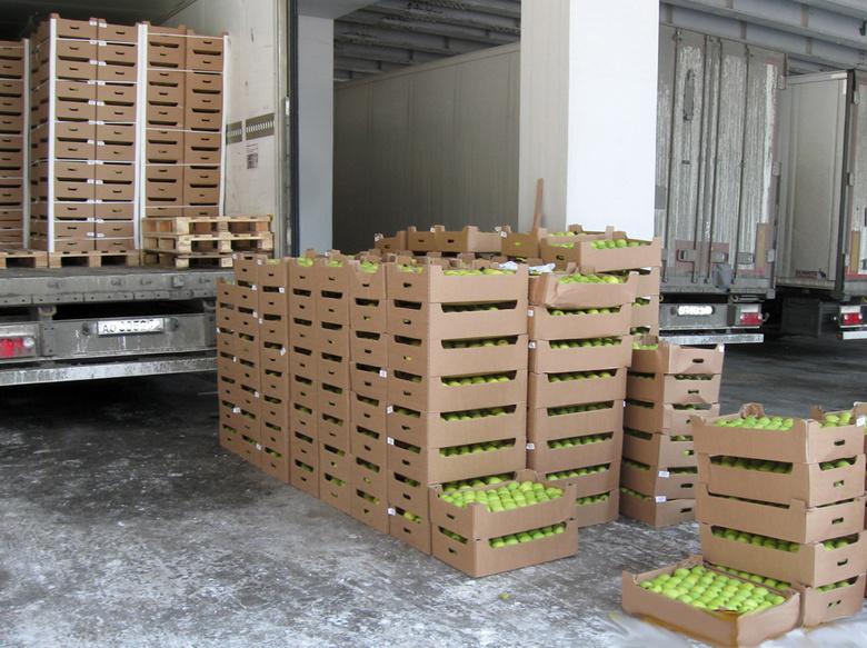 Около 150 тонн незаконно ввезенных в РФ яблок из Евросоюза уничтожили в Томске